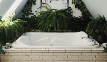 Comment choisir ses plantes pour la salle de bain ?
